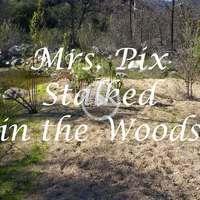 Pixellator's  Outdoors Nude  Video