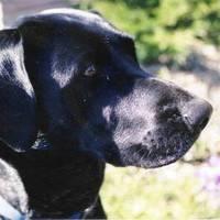 Abbydog
