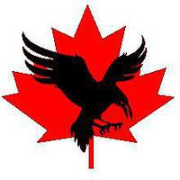 Canadian_Crow